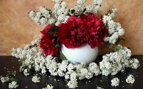 Картинка цветы, фото, ваза, пионы