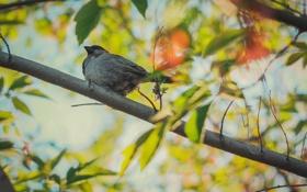 Картинка листья, солнце, макро, фото, птица, обои, воробей