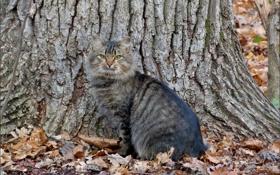 Обои осень, кошка, дерево