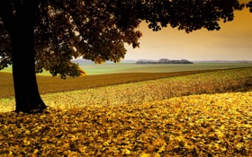 Картинка поле, осень, природа, дерево, листва