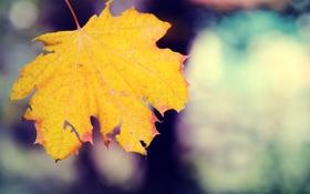 Картинка осень, лист, жёлтый, падение, прожилки