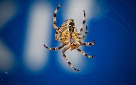 Картинка паутина, паук, боке