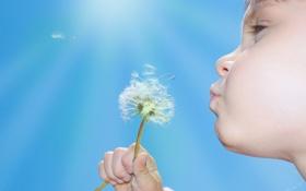 Обои растение, небо, одуванчик, природа, дети, девочка