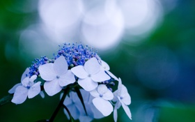 Обои цветок, синий, блики, растение, голубой, макро