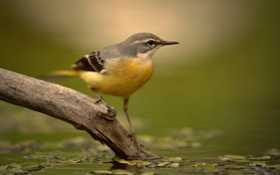 Картинка вода, птица, ветка, клюв