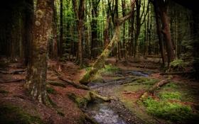 Картинка лес, деревья, ручей, Новая Зеландия, New Zealand