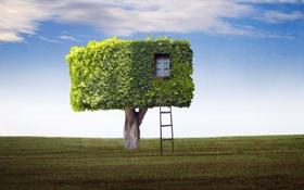 Картинка поле, дом, дерево, лестница
