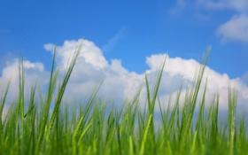 Картинка облака, трава, небо, макро