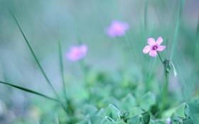 Картинка трава, зелень, цвет, размытость, розовый, цветок, природа