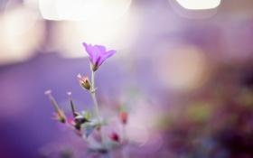 Обои цветок, боке, лепестки, нежность