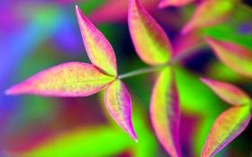 Обои листья, природа, цвет, ветка