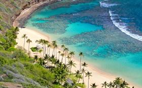 Обои пляж, пальмы, океан, Hawaii, Oahu, коралловый риф