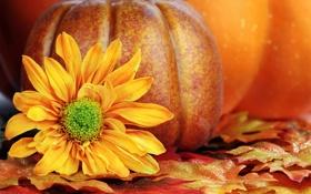 Картинка осень, листья, урожай, тыква, autumn, leaves, still life