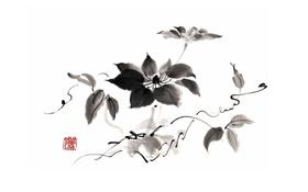 Обои белый, цветок, черный, монохромный, Китайская живопись