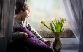 Картинка цветы, мальчик, окно