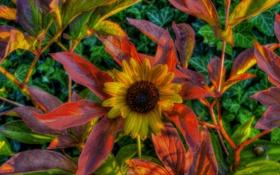 Обои листья, осень, hdr, цветы