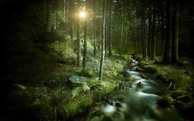 Обои солнце, ручей, Лес, forest