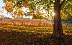 Картинка осень, листья, солнце, свет, природа, дерево, настроение