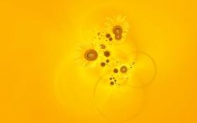 Обои фон, желтый, подсолнухи, обои