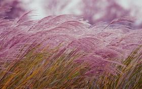 Обои трава, растение, природа
