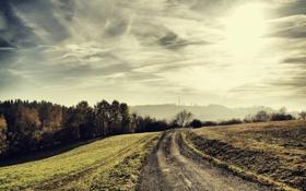 Обои дороги, деревья, дорога, природа, пейзажи, foto, photo