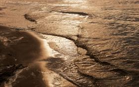 Обои песок, волны, пена, ветки, берег
