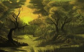 Обои лес, деревья, закат, река, ручей, камни, чаща
