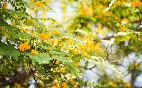 Обои листья, цветы, куст, боке