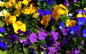 Картинка листья, клумба, сад, ковер, лепестки, краски