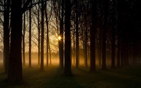 Обои лес, солнце, природа, туман, дымка, посадка