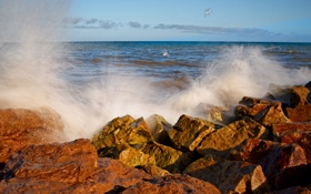 Картинка море, волны, брызги, птицы, камни, океан, чайки