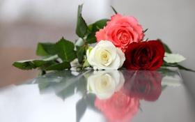 Обои фото, Цветы, Три, Розы