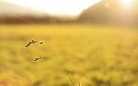 Обои трава, свет, природа