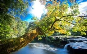 Обои деревья, река, камни, течение, листва, водоворот, берега