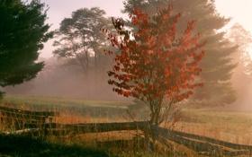 Обои трава, фото, дымка, забор, обои, деревья, туман