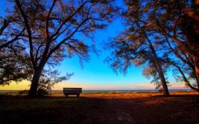 Обои солнце, деревья, берег, лавочка