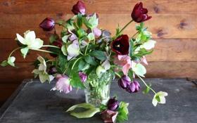 Обои цветы, фото, букет, тюльпаны, ваза, морозник
