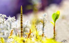 Обои Макро, пейзаж, мох, хвощ, макропейзаж
