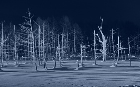 Обои зима, лес, свет, снег, деревья
