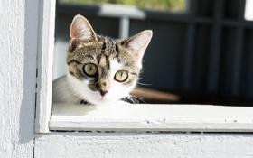Картинка кошка, кот, взгляд, окно