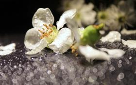 Картинка капли, белые, роса, боке, макро, цветы