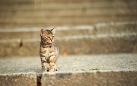 Картинка кот, котенок, улица, мордочка, лестница, ступени