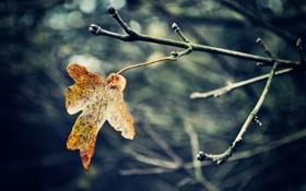 Картинка осень, макро, лист, ветка