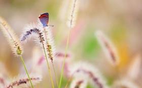 Обои лето, природа, бабочка