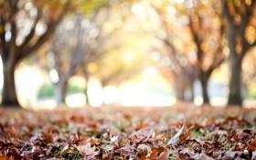 Обои осень, листья, макро, деревья, фон, дерево, обои