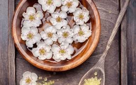 Обои цветы, ложка, миска, коробочка, морская соль