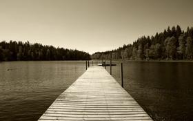 Картинка лес, пейзаж, природа, река, фото, обои, берег