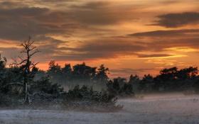 Картинка пейзаж, природа, туман, вечер