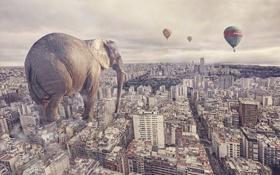 Обои город, слон, ситуация