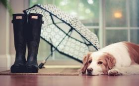Картинка дом, друг, собака